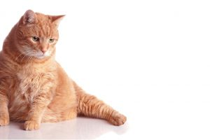 5 Signs Your Cat Has Diabetes