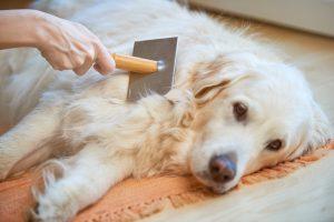Tips-for-Handling-Dog-Shed