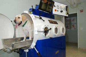 Hyperbaric Oxygen Therapy For Dogs | AV Veterinary Center