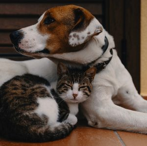 Pet Poison Prevention Awareness Month